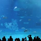 11月子連れ沖縄旅行記⑥3日目海洋博公園(美ら海水族館)